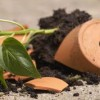 broken_flowerpot_of_basil
